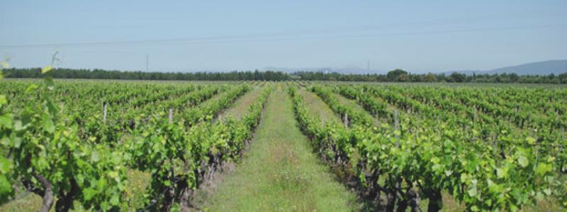 Enoport Wines | VivaoVinho.Shop
