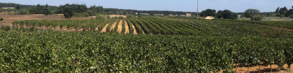 cover escaravelho wines